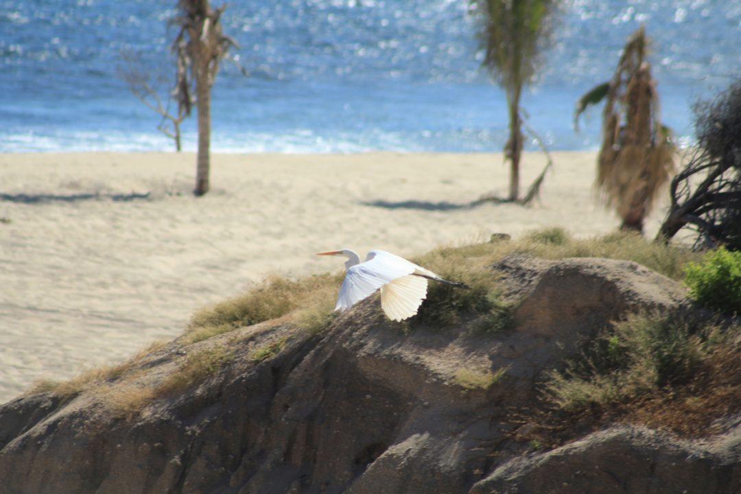 stork-Wild-Canyon-Los-Cabos
